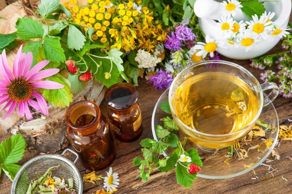 21 växter för ett hälsosamt te