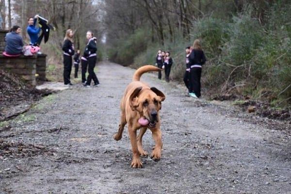 Hunden Ludivine råkar springa ett halvmaraton – hamnar på sjunde plats