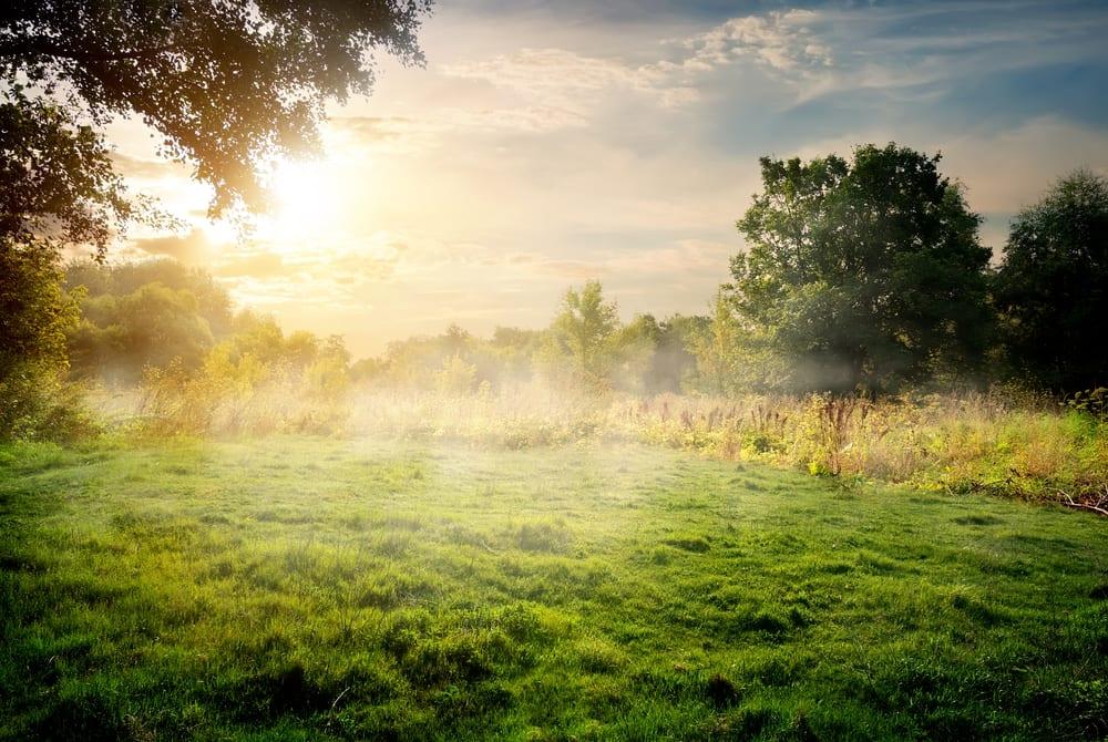 bättre hälsa, må bra, bra hälsa, hälsa, lycklig, vara lycklig, glädje, glad, psykologi, livsstil, natur, människa, välmående, välbefinnande, natur, naturområde, skog, skogar, skogsdungar, skogsbilder, naturliv, natur och hälsa, naturbilder, stress, oro, ångest, immunförsvar, fokus, koncentration, skogsglänta, glänta, älvdans