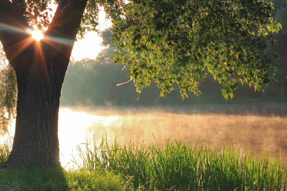 bättre hälsa, må bra, bra hälsa, hälsa, lycklig, vara lycklig, glädje, glad, psykologi, livsstil, natur, människa, välmående, välbefinnande, natur, naturområde, skog, skogar, skogsdungar, skogsbilder, naturliv, natur och hälsa, naturbilder, stress, oro, ångest, immunförsvar, fokus, koncentration , meditation, meditera, älv, flod, vattendrag, sjö