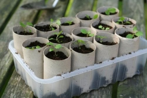 toarulle, pyssel, toarullepysel, barnpyssel, pyssel för barn, odla i toarulle, plantera