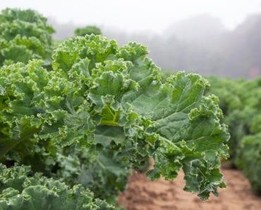 grönkål, recept, mat, inspiration, maträtter, vegetarisk mat, pesto, vego, vegansk mat