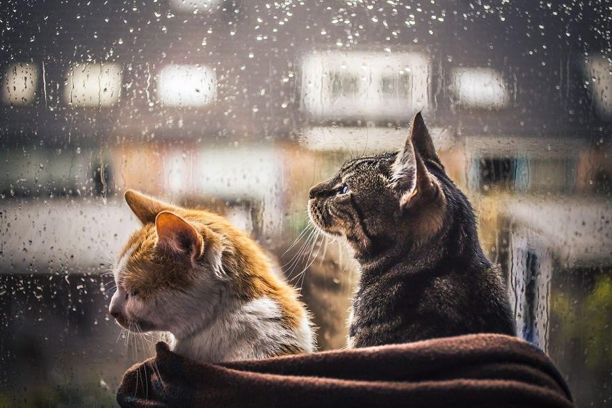 regn, oväder, katter, pälsklingar, katt, bilder, foton, fotografier, kattbilder, bilder på katter, söta bilder på katter, roliga bilder på katter