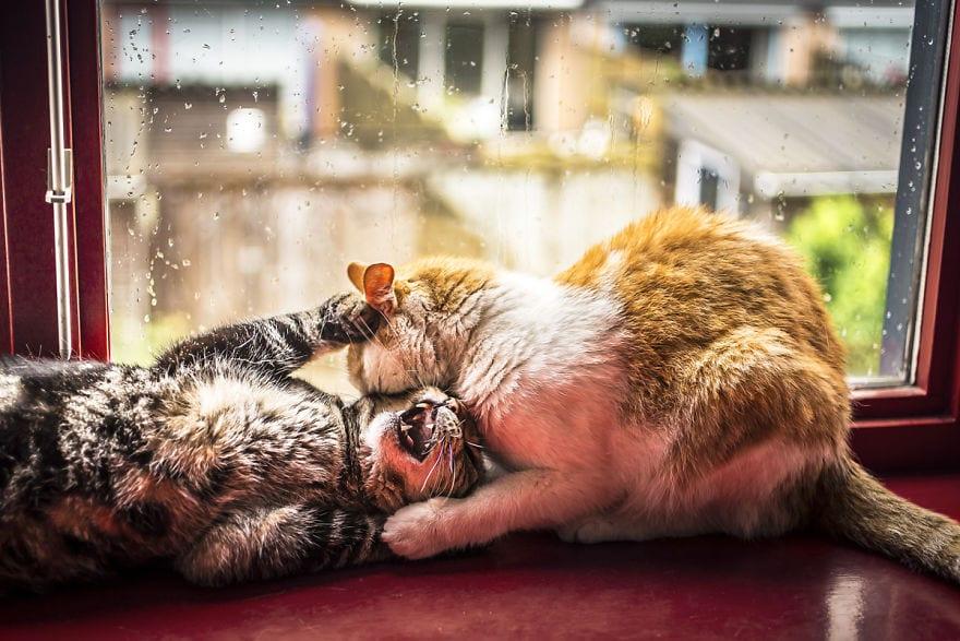 regn, oväder, katter, pälsklingar, katt, bilder, foton, fotografier, kattbilder, bilder på katter, söta bilder på katter, roliga bilder på katter, katter som leker
