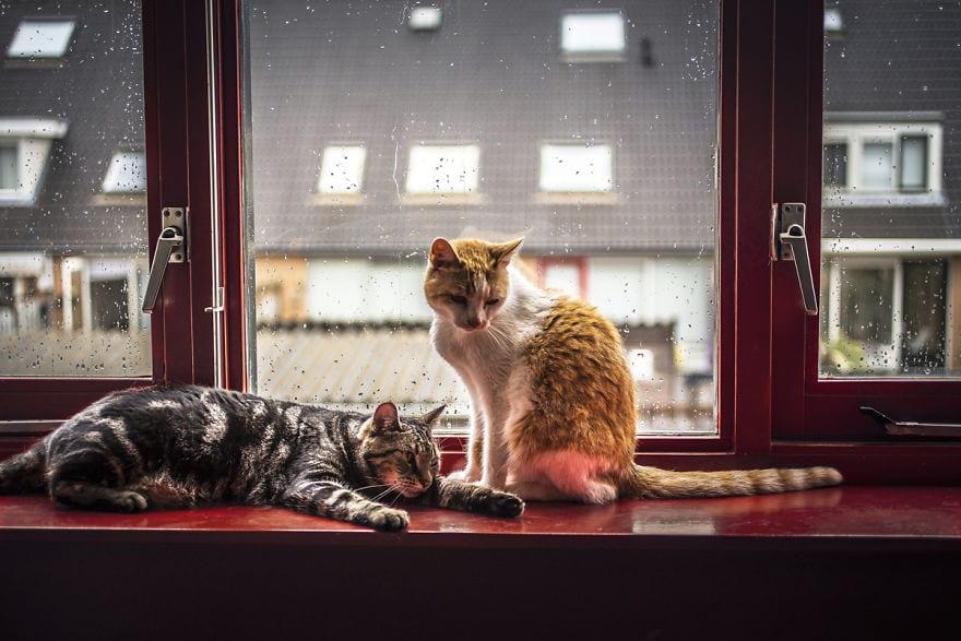 regn, oväder, katter, pälsklingar, katt, bilder, foton, fotografier, kattbilder, bilder på katter, söta bilder på katter, roliga bilder på katter, vilande katter, lata katter