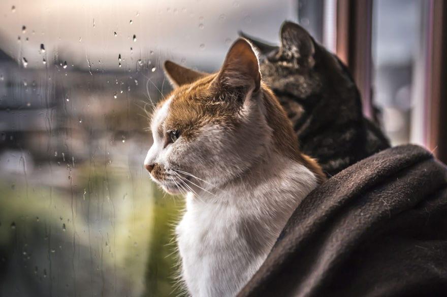 regn, oväder, katter, pälsklingar, katt, bilder, foton, fotografier, kattbilder, bilder på katter, söta bilder på katter, roliga bilder på katter, vackra kattbilder