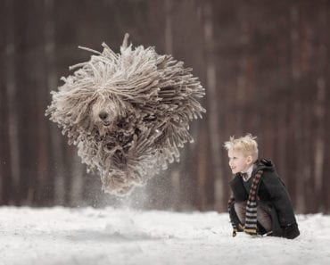 hundbild, hundbilder, barn, hund