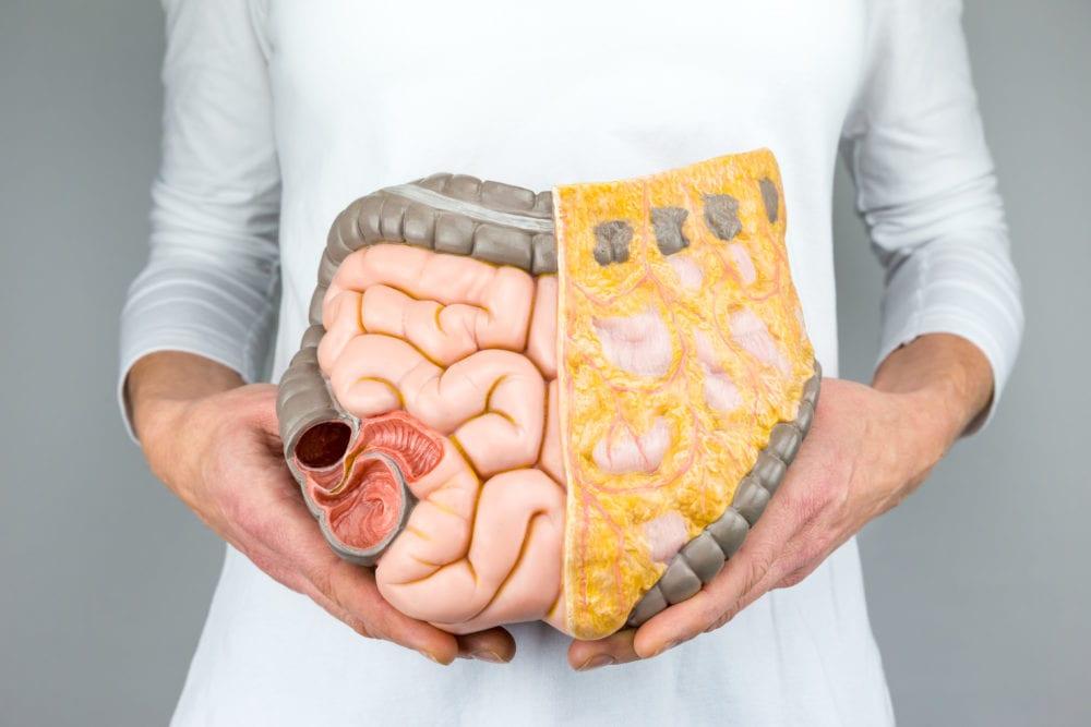 forskning, rön, organ, människokroppen, buken, matsmältningsapparaten, upptäckt, nytt organ, tarmar, tarmsjukdomar, kroppen, hur många organ