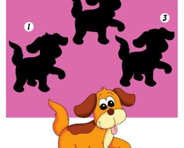 knep, knåp, knep och knåp, knep & knåp, förskola, skola fritids, barnpyssel, pyssel, pyssel för barn, form, lära sig känna igen former, hund, kan du hitta skuggan
