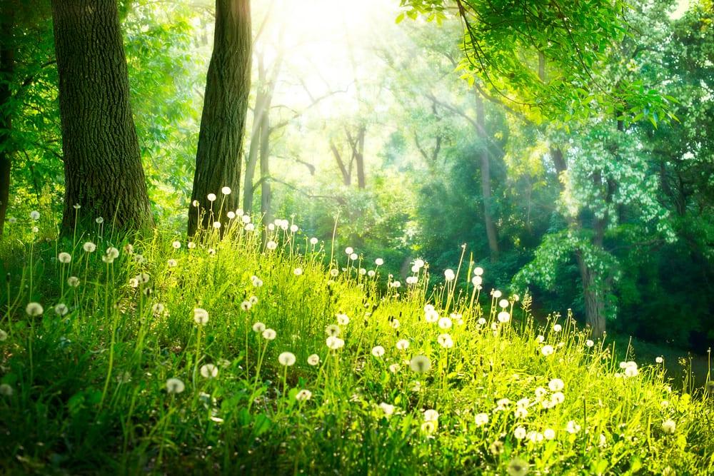 bättre hälsa, må bra, bra hälsa, hälsa, lycklig, vara lycklig, glädje, glad, psykologi, livsstil, natur, människa, välmående, välbefinnande, natur, naturområde, skog, skogar, skogsdungar, skogsbilder, naturliv, natur och hälsa, naturbilder, stress, oro, ångest, immunförsvar, fokus, koncentration , vår, grönska, blommor, blomma