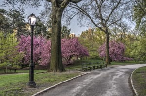 resa, resor, USA, New York, Central Park, saker att göra, park, resa till New York, parkbänk, körsbärsträd