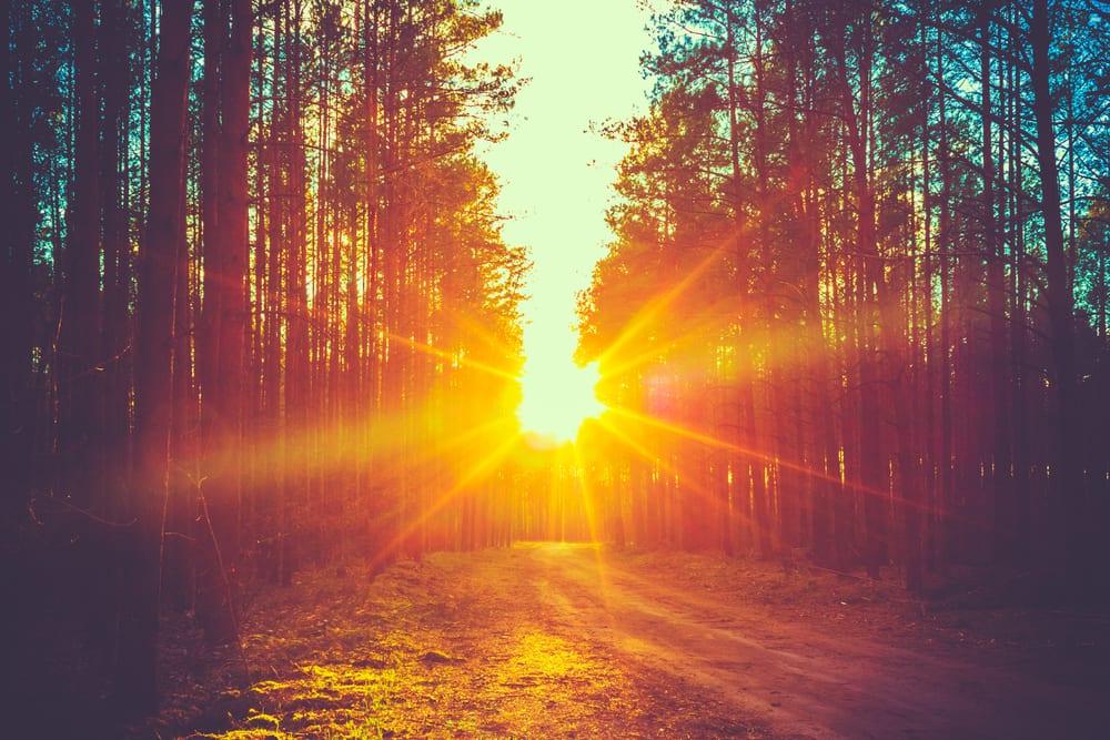 bättre hälsa, må bra, bra hälsa, hälsa, lycklig, vara lycklig, glädje, glad, psykologi, livsstil, natur, människa, välmående, välbefinnande, natur, naturområde, skog, skogar, skogsdungar, skogsbilder, naturliv, natur och hälsa, naturbilder, stress, oro, ångest, immunförsvar, fokus, koncentration, solnedgång, orange