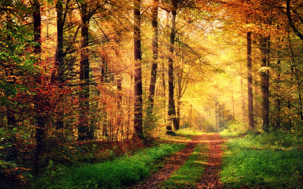 bättre hälsa, må bra, bra hälsa, hälsa, lycklig, vara lycklig, glädje, glad, psykologi, livsstil, natur, människa, välmående, välbefinnande, natur, naturområde, skog, skogar, skogsdungar, skogsbilder, naturliv, natur och hälsa, naturbilder, stress, oro, ångest, immunförsvar, fokus, koncentration , skogspromenad, höst, höstfärger, röda löv