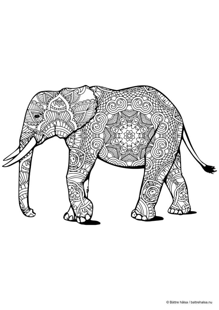 Målarbild för vuxna – zentangle-elefant