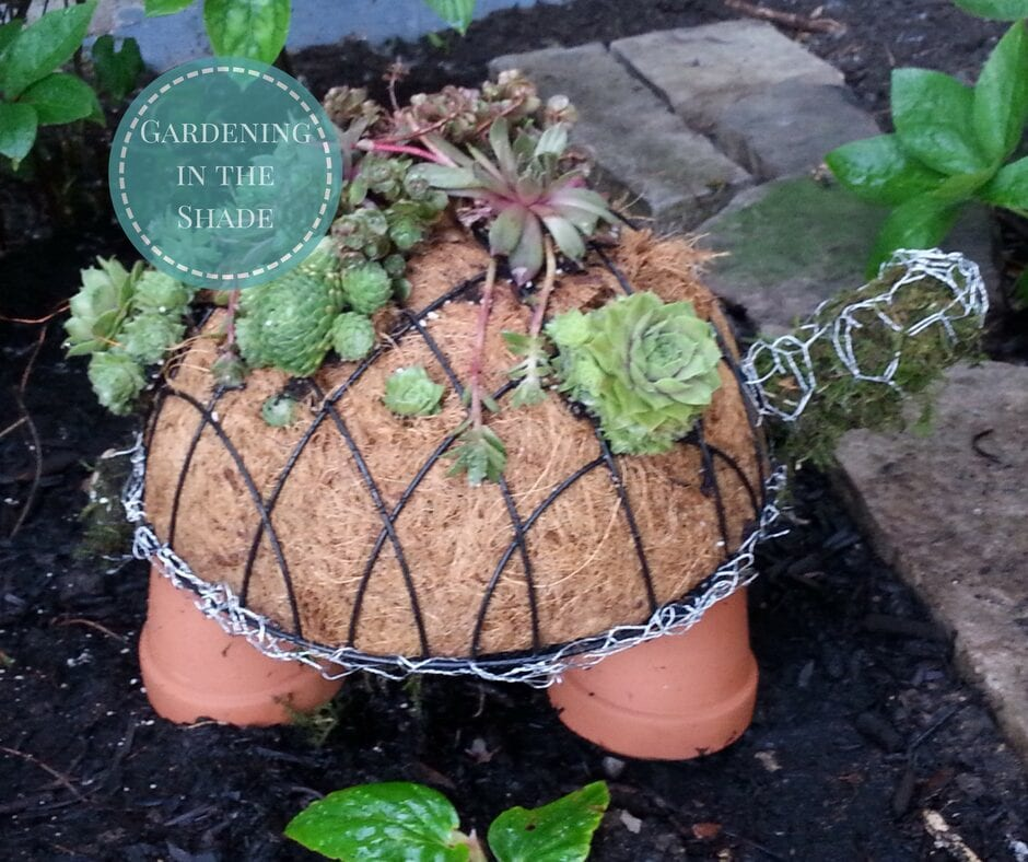 trädgård, pyssel, trädgårdspyssel, suckulent, suckulenter, plantering, sköldpadda, sköldpaddor, roliga planteringar, pysselidé, pysseltips