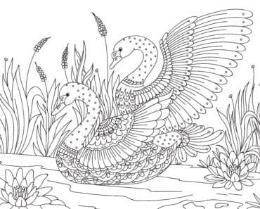 målarbilder, målarbild, gratis målarbilder, gratis målarbild, målarbok, målarböcker, målarbok för vuxna, målarböcker för vuxna, zentangle, mandala, mindfulness, måla, färglägga, mindfullness, doodle, bättre hälsa, bra hälsa, djur, fågel, fåglar, svan, svansjö
