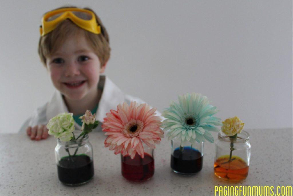 regnbågsexperiment, färgexperiment, blommor i färgat vatten, växter i färgat vatten