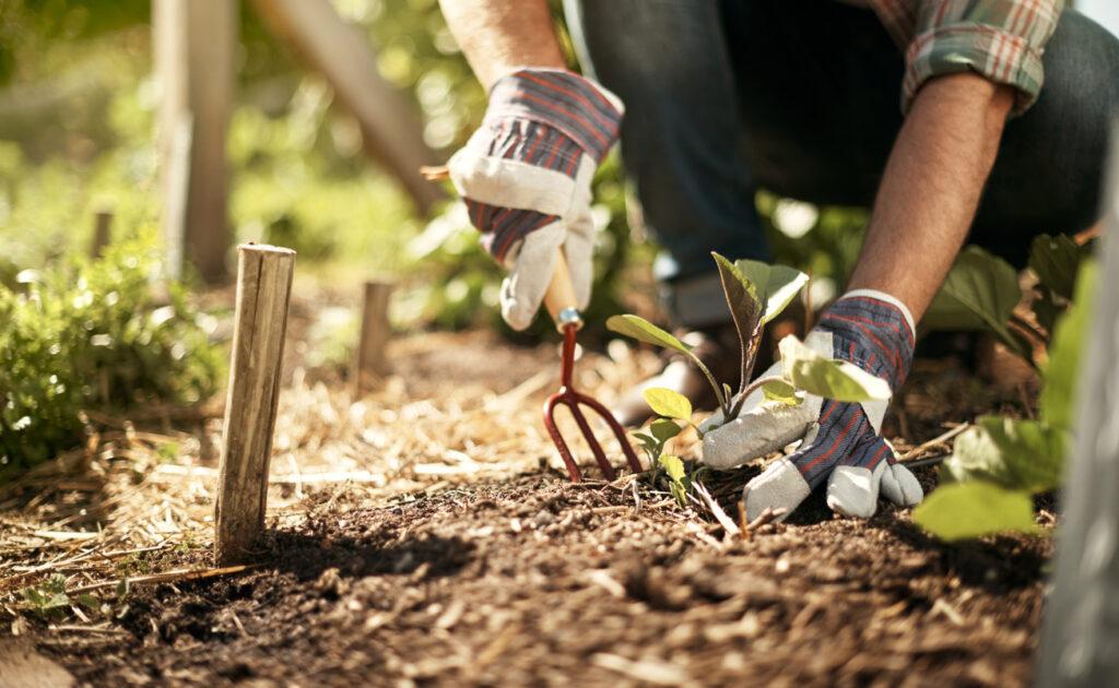 bättre hälsa av trädgårdsarbete