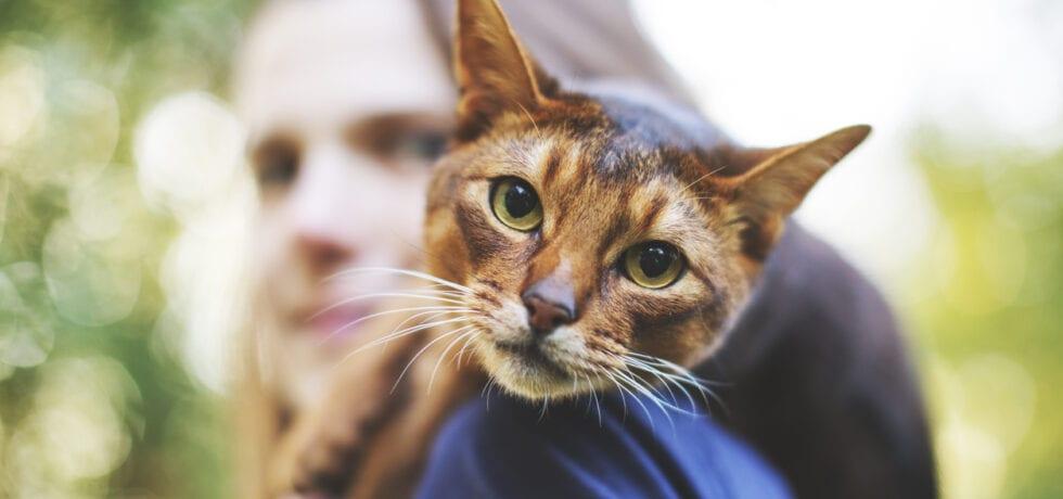 hälsoskäl att skaffa katt